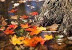 autumn-2900166_640
