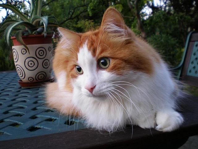 cat-1997911_640